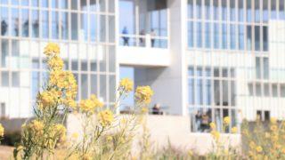 菜の花の奥にガラス張りの建物