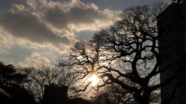 うねる木が逆光に照らされる