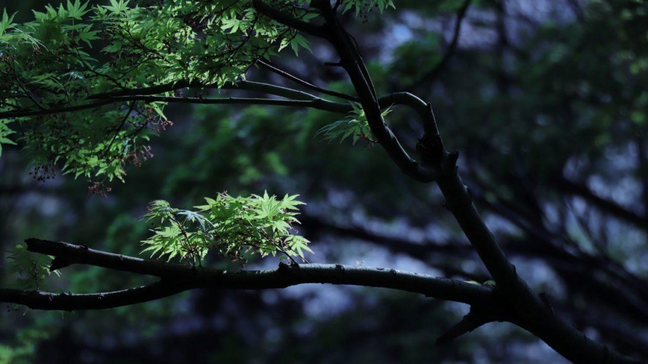 暗い森の中の緑の紅葉