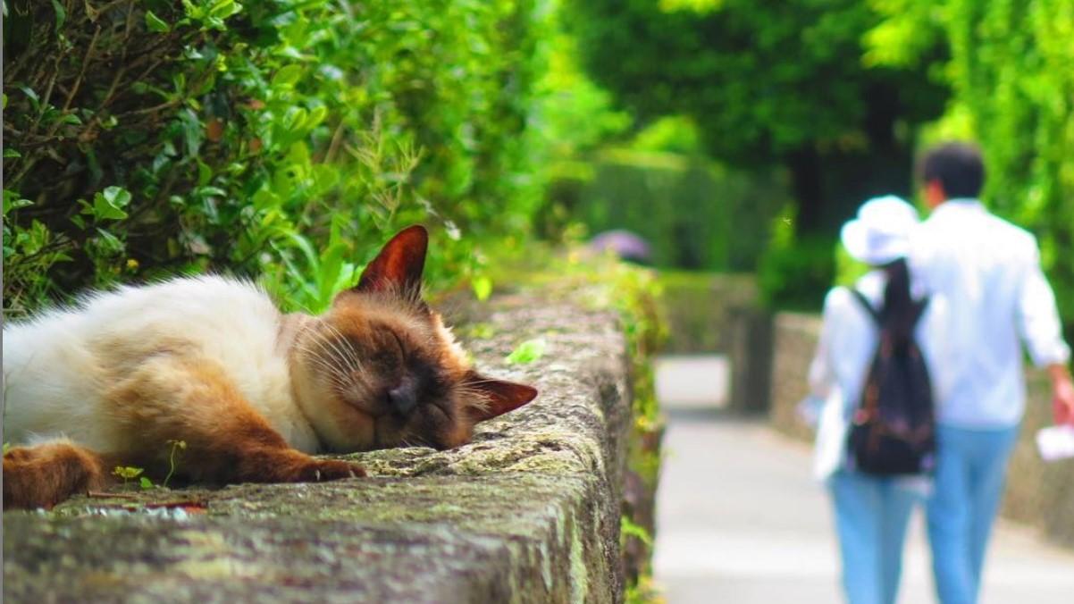 石段の上で猫が寝ている
